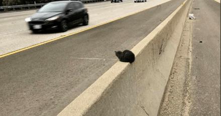En voiture, le policier s'arrête brusquement et fonce vers une petite ombre au milieu de la la voie