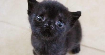 """Ce chaton a été abandonné par sa maman à cause d'un """"défaut"""" qui le rend magnifique !"""