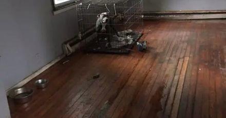 Les voisins entendent des aboiements dans une maison vide, ce qu'ils découvrent est inhumain