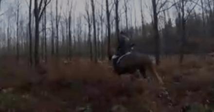 Picardie : une chasse à courre sabotée à l'aide de croquettes
