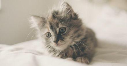 Open d'Australie : des chiots et des chatons au secours de joueurs en quarantaine ?