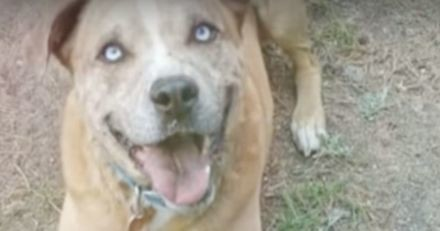 Ce chien refuse de manger s'il n'a pas son agneau en peluche à ses côtés (Vidéo)