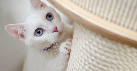 Il abandonne son chat dans son appartement et le laisse mourir de faim : la justice rend son verdict