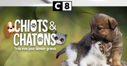 Chiots et chatons, la nouvelle série de C8 sur les premiers pas de nos adorables compagnons