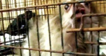 Il entre dans une usine à chiots et s'approche d'une cage : son coeur se brise à la vue d'un petit détail...