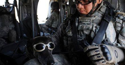Les chiens de l'armée porteront bientôt des lunettes à réalité augmentée