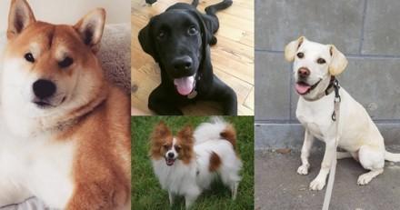 Ces chiens qui illuminent nos journées dans les bureaux de Wamiz