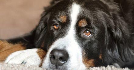 Cahors : un refuge lance un concours de poèmes pour aider à faire adopter des chiens