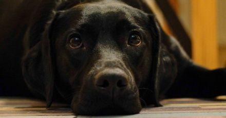 Elle laisse son chien seul et le retrouve mort quelques minutes après : elle pousse un cri d'alerte