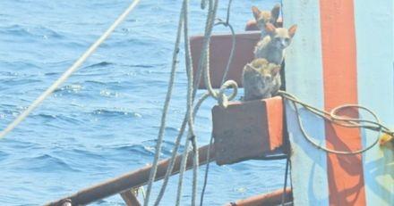 Navire en flammes en Thaïlande : un homme aperçoit 4 chats sur une poutre et se jette à l'eau