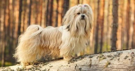L'incroyable épopée d'une chienne perdue