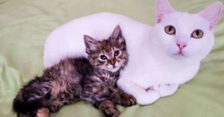 Ils cherchent une famille pour un chaton égaré, mais leur chat a un tout autre plan