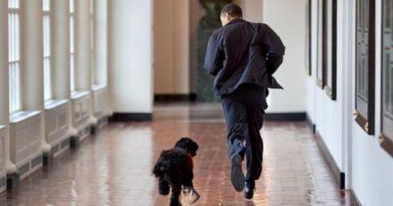 Bo, le chien de Barack Obama est mort : la famille Obama lui rend hommage