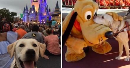 Vous rêviez d'aller dans un parc Disney avec votre chien ? C'est désormais possible !