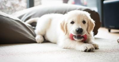 Comment bien accueillir un chien chez soi ?