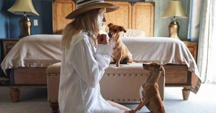 """Mapets, l'appli qui répertorie tous les lieux """"dog friendly"""" pour tout partager avec votre chien !"""