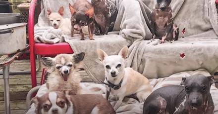 Elle a transformé son appartement en refuge pour chiens à besoins spécifiques