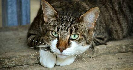 Ils perdent leur chat pendant un déménagement : 11 ans plus tard, la vérité explose