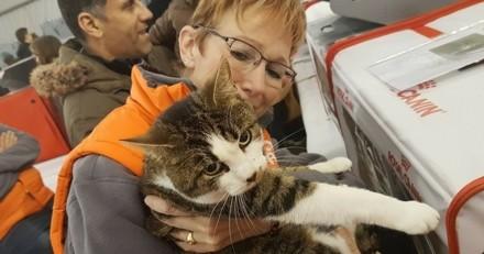 519 animaux ont reçu leur plus beau cadeau grâce au Noël de la SPA ! (Vidéo)
