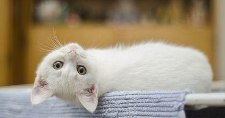 Le minuscule chaton blanc s'approche de la chienne : sa réaction est totalement inattendue !