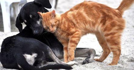 Maltraitance animale : amendes jusqu'à 10 000 euros prévues à Liège