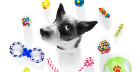 10 jouets indestructibles pour chien