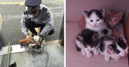 Une chatte prend un commissariat en otage… pour y donner la vie !