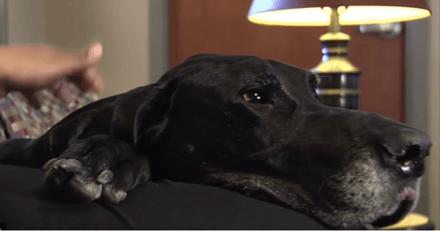 Ce chien se couche sur sa maîtresse pour la protéger des coups de son compagnon
