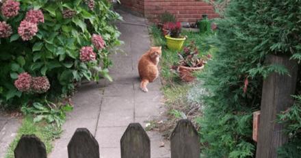 Elle aperçoit un chat dans un jardin et son regard la bouleverse : mais la vérité est bien différente