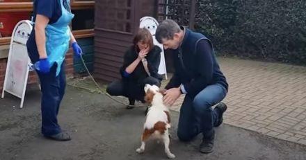 6 ans après la disparition de leur chien, l'horrible vérité éclate enfin !