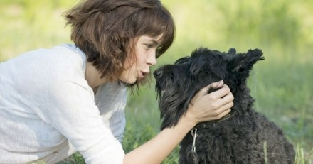 Comment bien communiquer avec son chien
