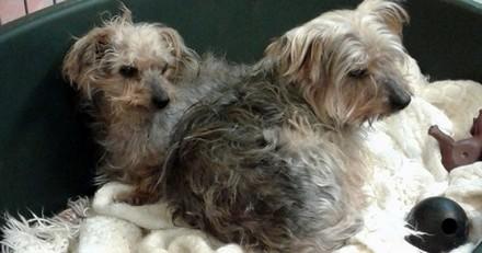 3 chiens et 2 chevaux en détresse secourus chez un couple récidiviste