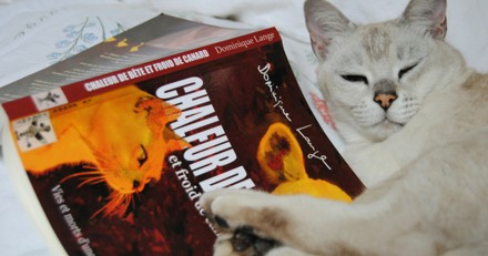 Dans son livre « Chaleur de bête et froid de canard », une ex vétérinaire casse le mythe sur sa profession