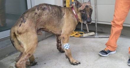 1 an de prison ferme pour l'éleveuse qui avait incendié le chien Fudji