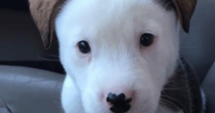 Ce chiot a le hoquet pour la première fois et sa réaction fait le tour du monde (Vidéo)