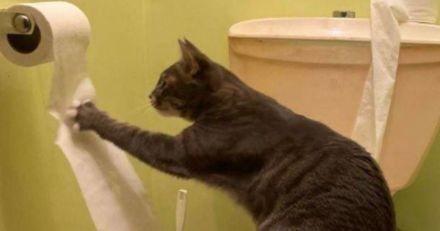 Elle entre dans les toilettes et pousse un cri en voyant ce que fait son chat !