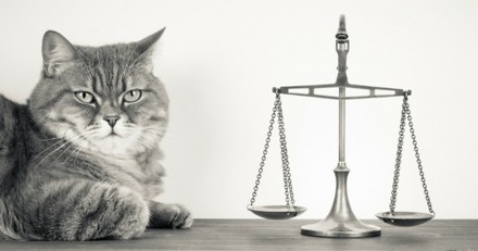 Des avocats travaillent sur un Code pour le droit des animaux
