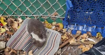 Trouvé dehors, ce chat dort désormais dans un bon lit douillet