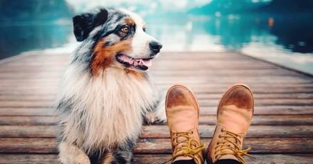 Ce passionné de photos met en avant la vraie nature des chiens, et c'est magnifique