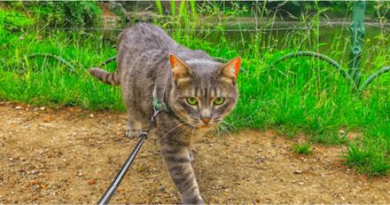 Disparu depuis plus d'un mois à l'Aéroport d'Orly, Zadig le chat a été retrouvé