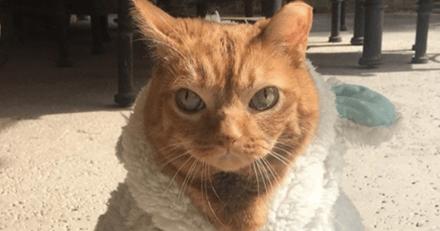 Elle adopte un chat et se rend compte qu'il n'est pas tout à fait comme les autres...