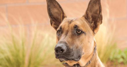 Jugé pour avoir poignardé un chien, il est condamné à 1 an de prison