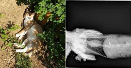 Il emmène son chat blessé chez le vétérinaire : ce qui s'affiche à l'écran de la radio est un choc