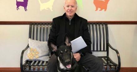 Joe Biden s'est fait une entorse en... jouant avec son chien !