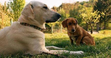Le chien sort jouer et revient à la maison avec un chien errant en cadeau !