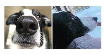 Un chien avec de l'ADN de girafe ? Ce toutou a un cou immense et impressionne tous les passants