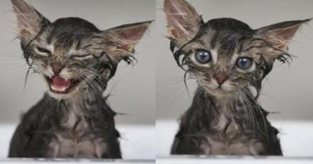 Ce chaton qui prend son bain après une explosion de caca devient une star sur Instagram