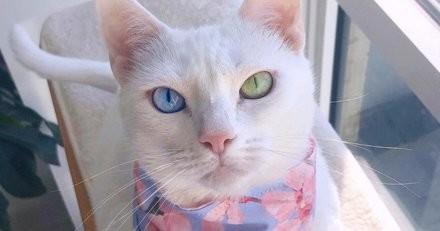 Elle repère une caisse vide au salon de l'adoption et lit la pancarte : ses yeux se remplissent de larmes...