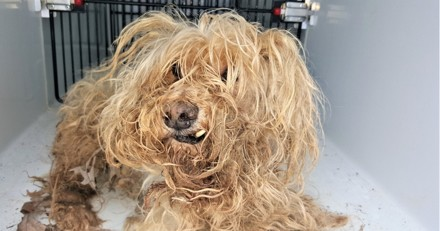 Ce chien ne ressemblait plus à rien, aujourd'hui il est en pleine métamorphose !
