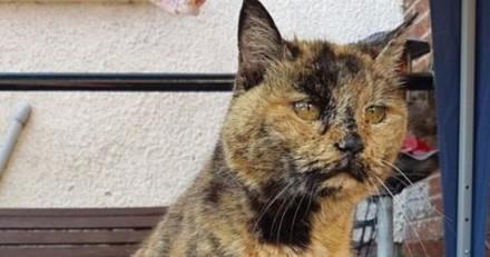 Le chat le plus vieux du monde vient de survivre à une opération qui va encore prolonger sa vie